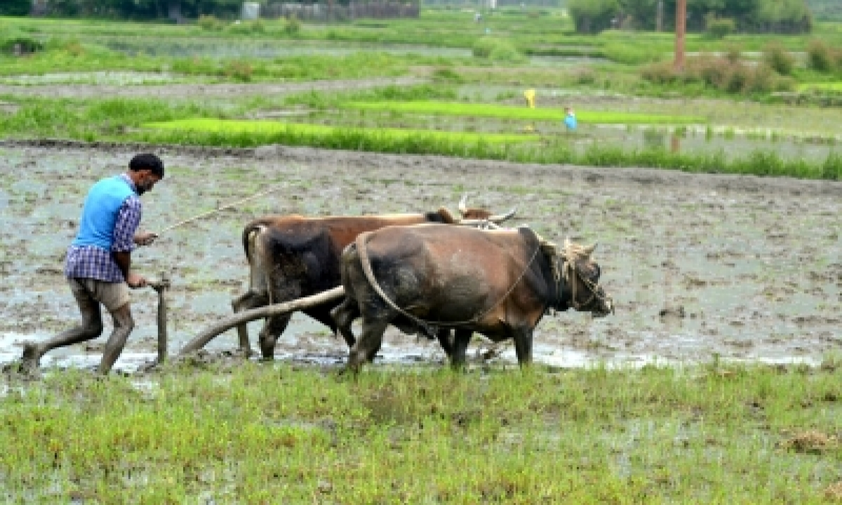 TeluguStop.com - Agriculture Loans Not Part Of Government's Interest Waiver Scheme