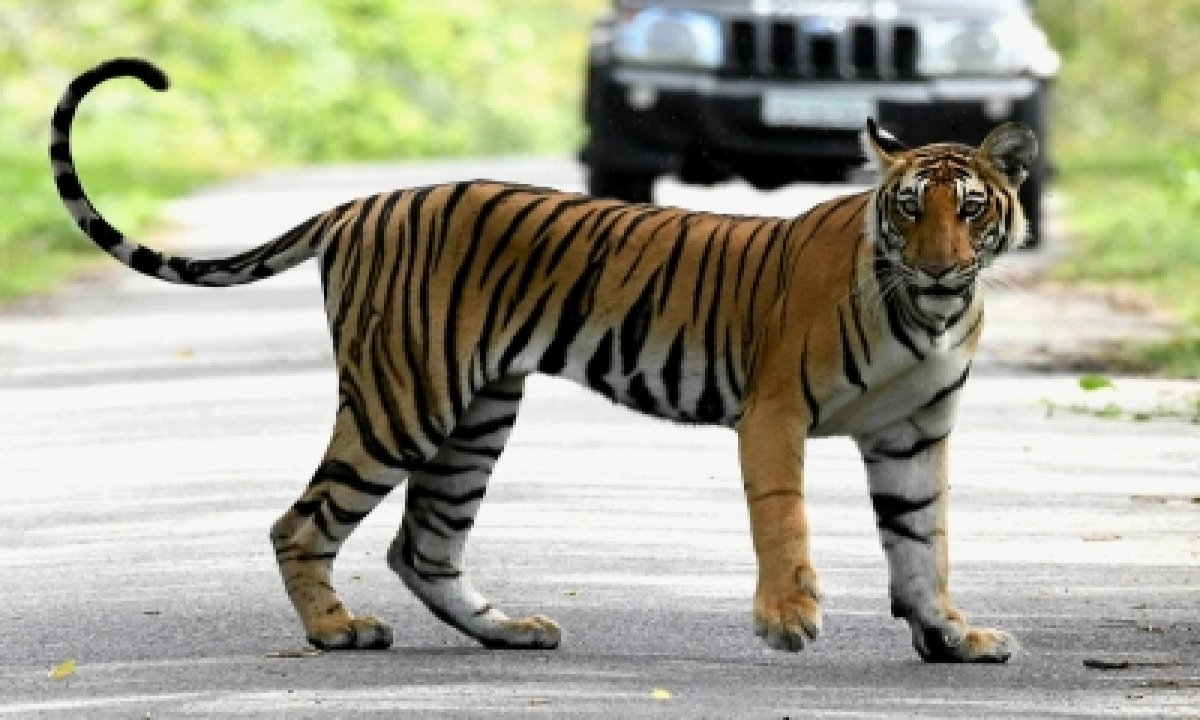 TeluguStop.com - 'bagh Mitras' To Help Check Man-tiger Conflict In Up