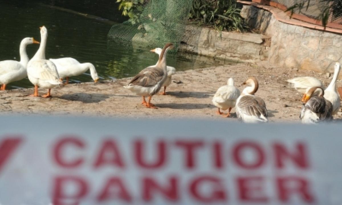 TeluguStop.com - Bird Flu: Unnatural Bird Deaths Reported From J&k, Jharkhand
