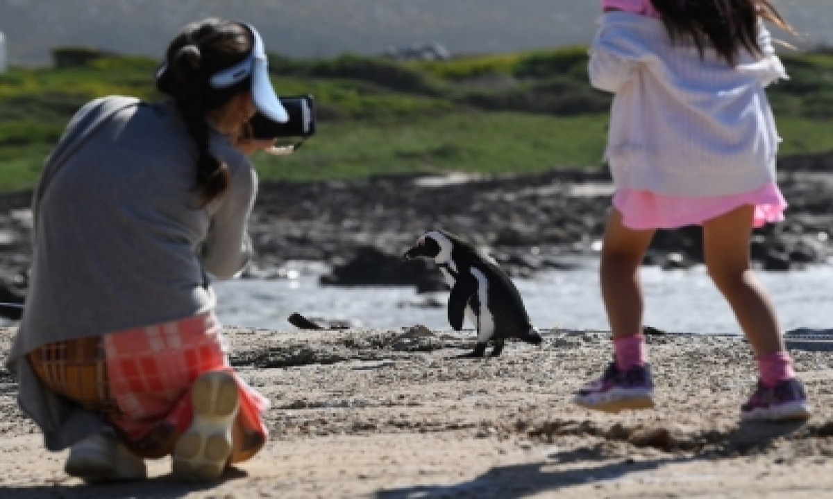 TeluguStop.com - Corona Restrictions Keep Up Tourists Away From Wildlife Parks