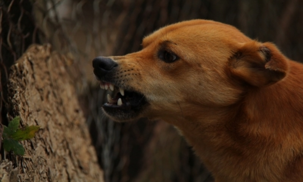 TeluguStop.com - Five Distinct Dog Types Existed 11,000 Years Ago: Study
