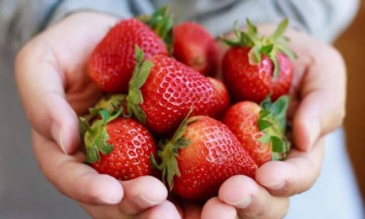 TeluguStop.com - Israel's Peak Strawberry Season Offers New Tastes