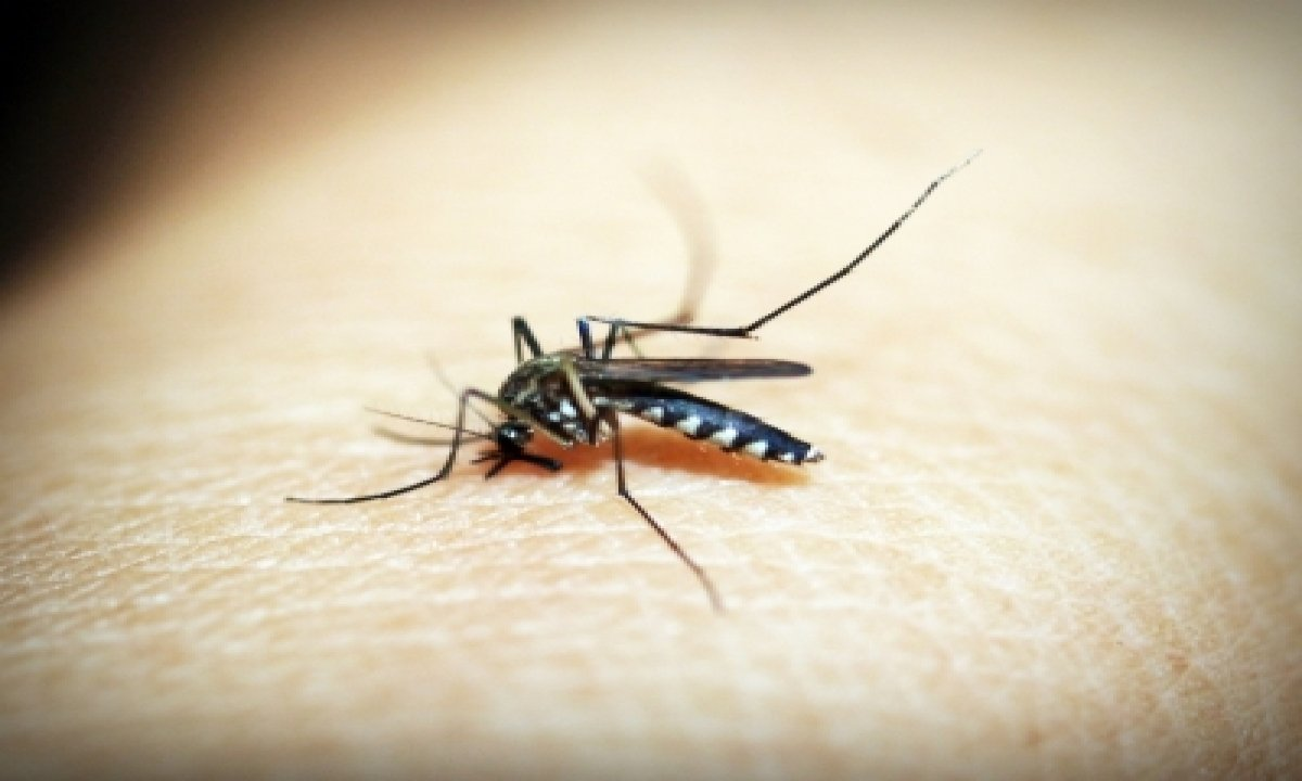 TeluguStop.com - Malaria Cases In India Drops To 5.6mn In 2019: Who Report