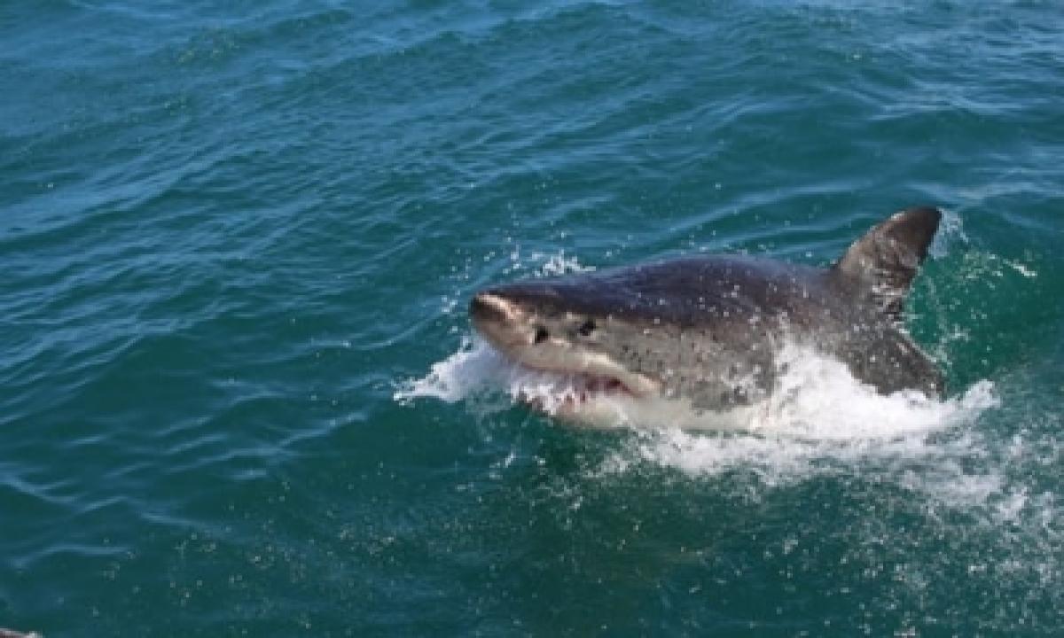 TeluguStop.com - Man Killed In W.australia Shark Attack