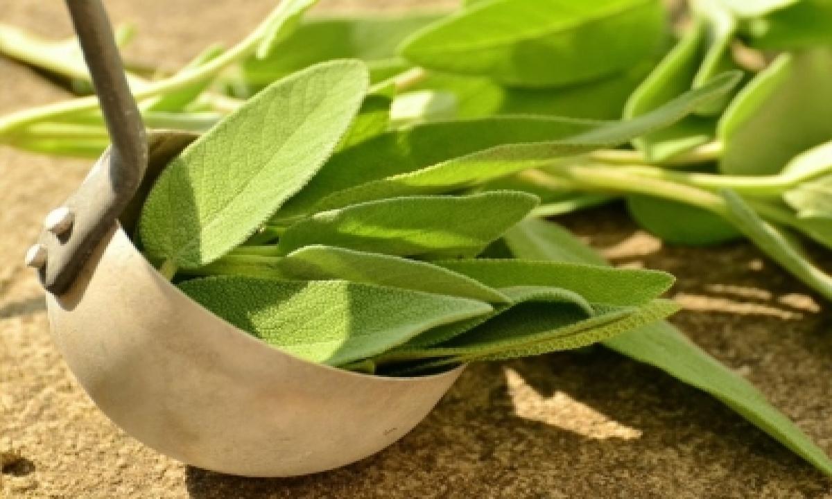 TeluguStop.com - Nbri Develops Herbal Drug For Kidney Stones