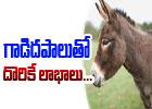 Healthy Benefits Of Donkey Milk-Telugu Health-Telugu Tollywood Photo Image