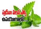 Healthy Benefits Of Mint-Telugu Health-Telugu Tollywood Photo Image
