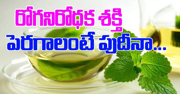 TeluguStop.com - Pudina ( Mint) Leaves Health Benefits-Telugu Health-Telugu Tollywood Photo Image