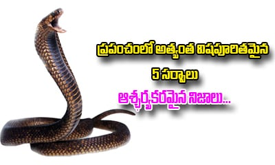 5 Most Poisonous Snakes In The World And Some Facts-General-Telugu-Telugu Tollywood Photo Image