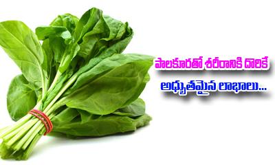 Amazing Benefits Of Spinach-Telugu Health - తెలుగు హెల్త్ టిప్స్ ,చిట్కాలు-Telugu Tollywood Photo Image