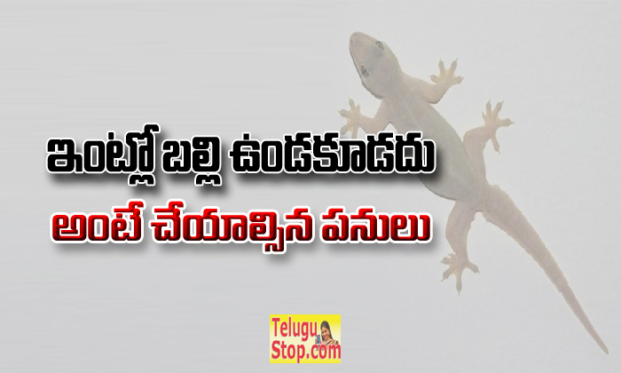 How To Get Rid Of Lizards At Home? Useful Tips- -How To Get Rid Of Lizards At Home? Useful Tips-