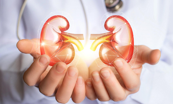 Kidney Stones Causes And Care Tips- -Kidney Stones Causes And Care Tips-