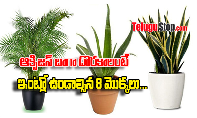 Plants That Give Oxygen At Home-General-English-Telugu Tollywood Photo Image