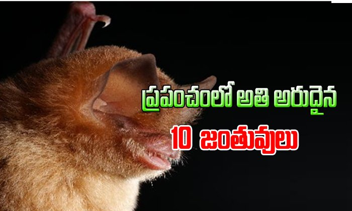 Top 10 Omg Rare Animals In The World