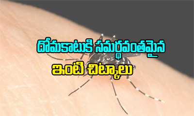 Home Remedies For Mosquito Bites-General-Telugu-Telugu Tollywood Photo Image
