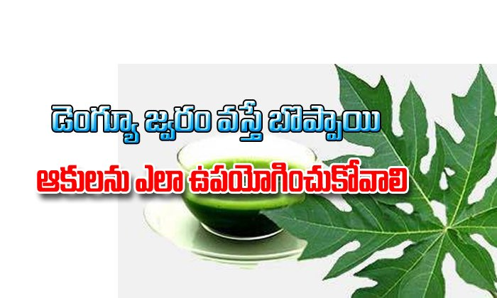 How To Use Papaya Leaves In Dengue Fever