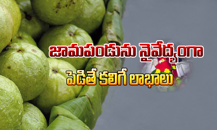 Guava Fruit Importance In Pooja-importance In Pooja,telugu Devotional Telugu Devotional Bhakthi(తెలుగు భక్తి ) Guava Fruit Importance In Pooja-importance Pooja Telugu Devotional-Guava Fruit Importance In Pooja-Importance Pooja Telugu Devotional