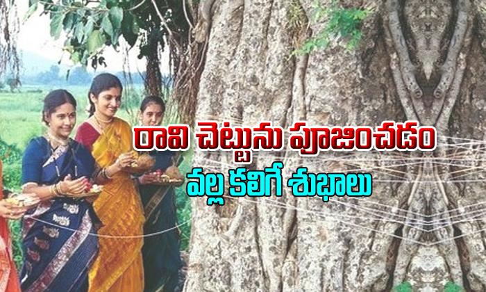 Reasons To Pray The Peepal Tree
