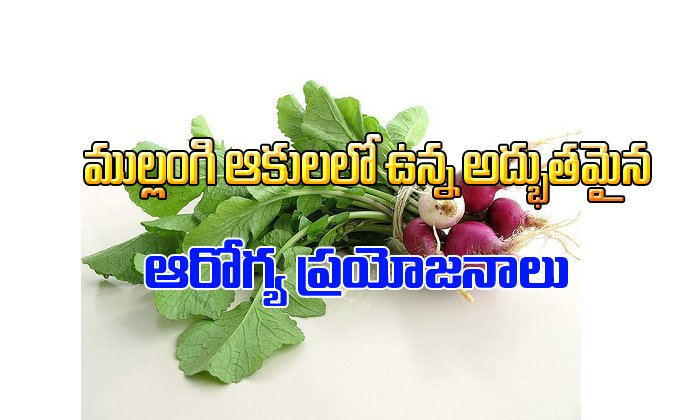 Amazing Health Benefits Of Radish Leaves-Telugu Health-Telugu Tollywood Photo Image