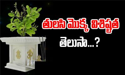 తులసి మొక్క విశిష్టత తెలుసా -Devotional-Telugu Tollywood Photo Image