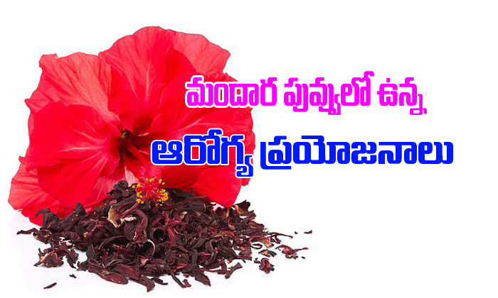 TeluguStop.com - మందార పువ్వులో ఉన్న ఆరోగ్య ప్రయోజనాలు-Telugu Health-Telugu Tollywood Photo Image
