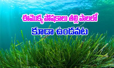 ఈ మొక్క పోషకాలు తల్లిపాలలో కూడా ఉండవట.-Telugu Health-Telugu Tollywood Photo Image