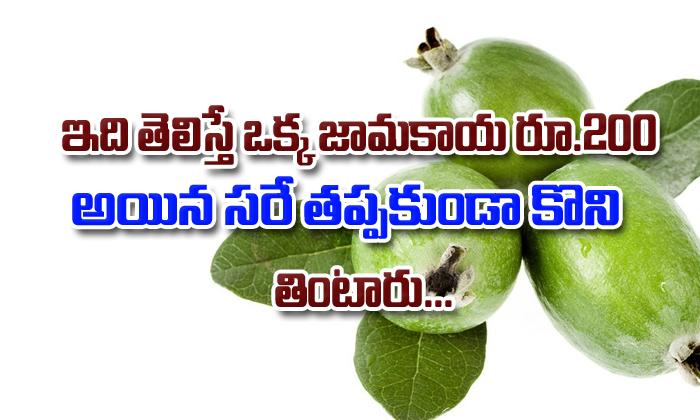 Amazing Health Benefits Of Guava Fruit In Telugu