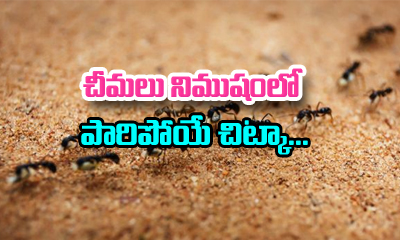 How To Get Rid Of Ant At Home-Telugu Health - తెలుగు హెల్త్ టిప్స్ ,చిట్కాలు-Telugu Tollywood Photo Image
