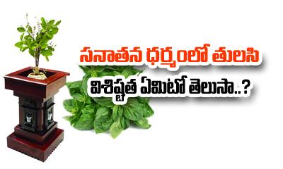 TeluguStop.com - Importance Of Tulasi Pooja-Devotional-Telugu Tollywood Photo Image
