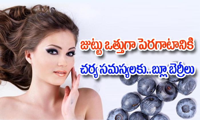 జుట్టు ఒత్తుగా పెరగటానికి,చర్మ సమస్యలకు…. బ్లూ బెర్రీలు-Telugu Health-Telugu Tollywood Photo Image