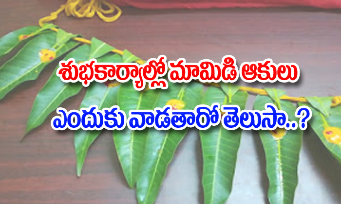 Mango Leaves Spiritual Significance