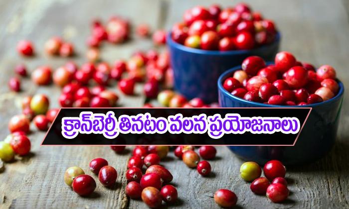 క్రాన్బెర్రీ తింటే ఎన్ని ప్రయోజనాలు కలుగుతాయో తెలుసా-Telugu Health-Telugu Tollywood Photo Image