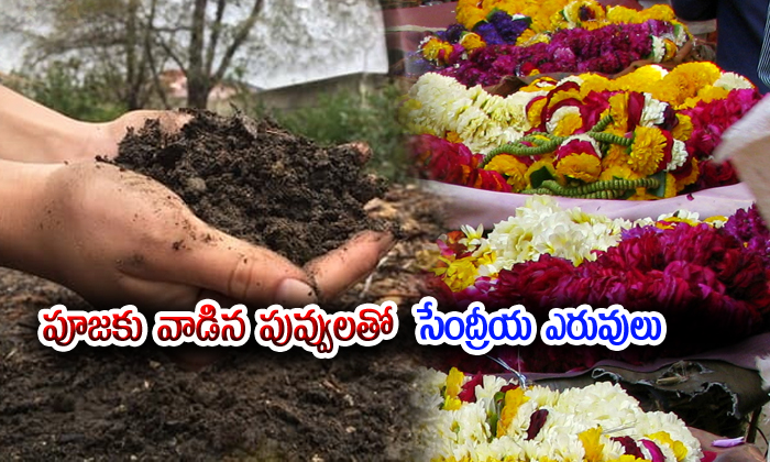 Engg Grads Turns Temple Flowers Into Organic Manure
