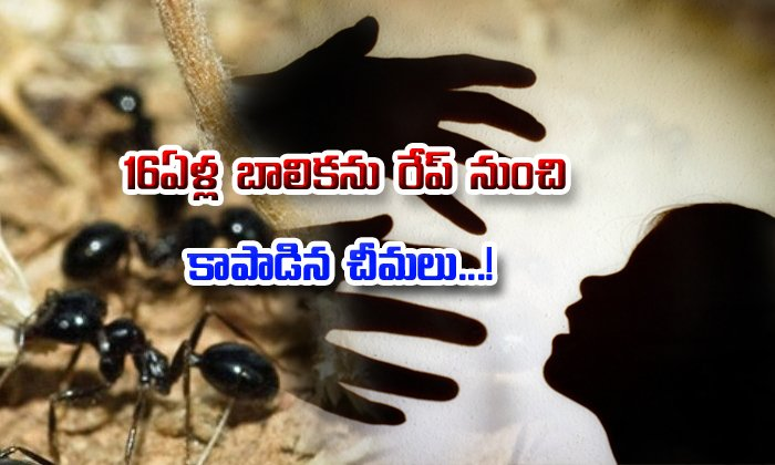 Ants Save 16-year-old From Getting Raped- Telugu Viral News Ants Save 16-year-old From Getting Raped--Ants Save 16-year-old From Getting Raped-
