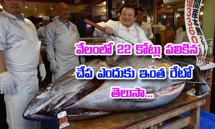 Endangered Tuna Sold For Rs 21 Crore In Japan World's Most-prized Fish