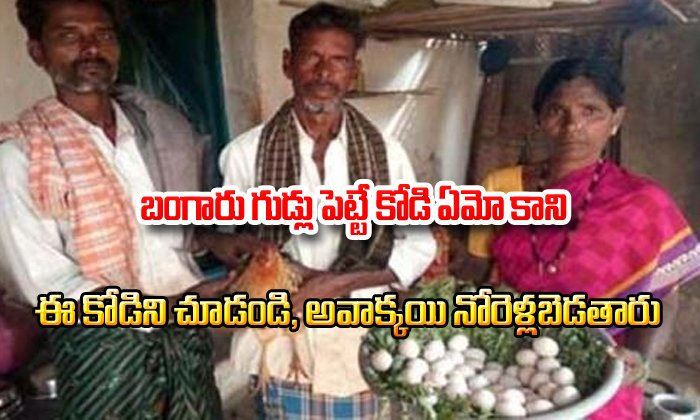 This Hen Gets Guinness Book Of World Record