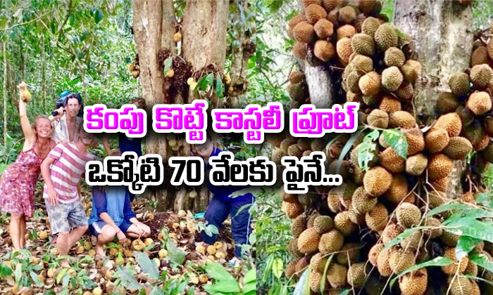 Things You Need To Know About Durian Fruit- Telugu Viral News Things You Need To Know About Durian Fruit--Things You Need To Know About Durian Fruit-