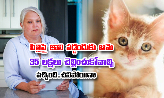 Bill Of The Month Rabies Treatment After Cat Bite 50000 Dollors