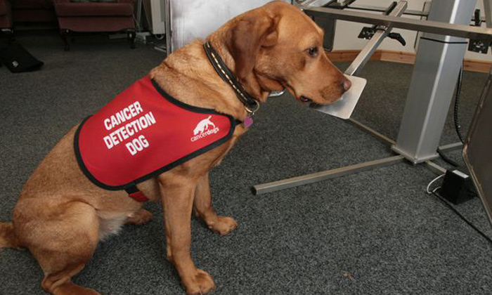 Dogs Can Identify Cancer-