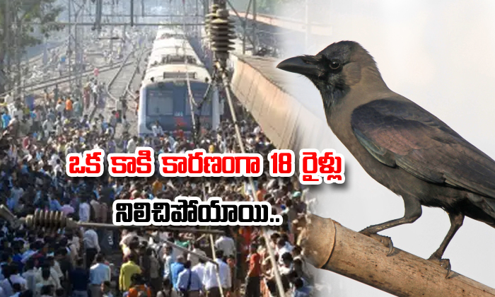 Eighteen Trains Stopped Due To Crow