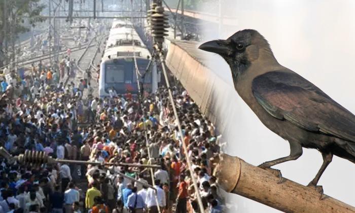 చోద్యం : ఒక కాకి కారణంగా 18 రైళ్లు నిలిచిపోయాయి… అసలేం జరిగిందో తెలిస్తే ముక్కున వేలేసుకుంటారు-General-Telugu-Telugu Tollywood Photo Image