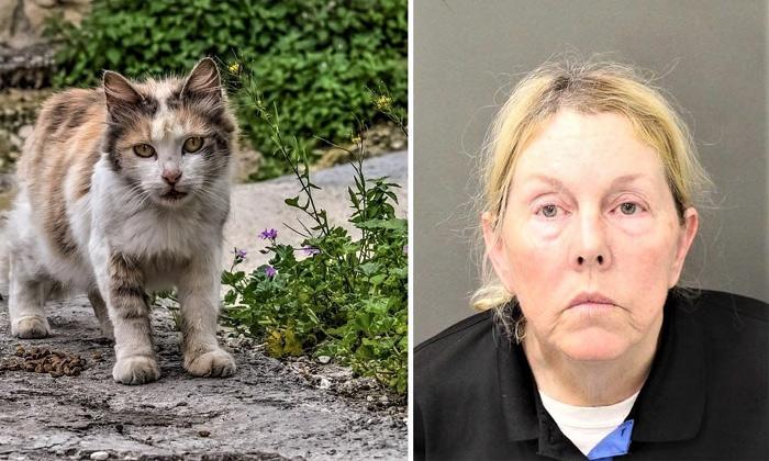 Feeding Cat Made A Women Arrest In Florida
