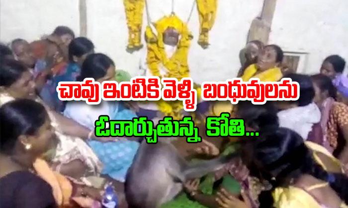 Monkey Consoles Woman At Karnataka