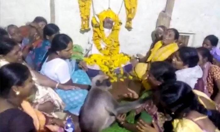వీడియో : చావు ఇంటికి వెళ్లి బంధువులను ఓదార్చుతున్న కోతి… ఆ తర్వాతే అంత్యక్రియలు-General-Telugu-Telugu Tollywood Photo Image