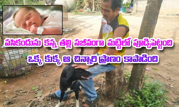 Dog Saves Baby Buried Alive In A Thailand Field