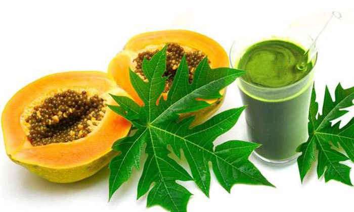 How To Use Papaya Leaves In Dengue Fever -