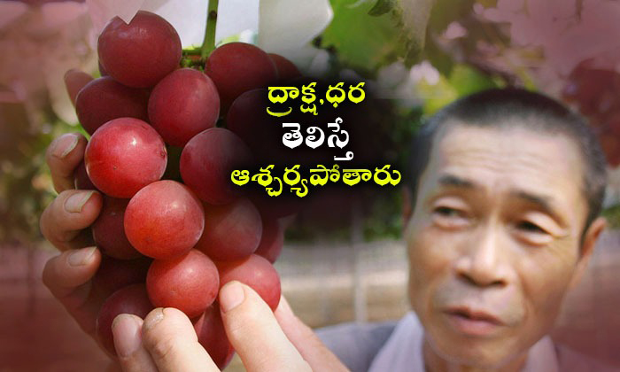 A Bunch Of 24 Grapes Sold For $11,000 In Japan.