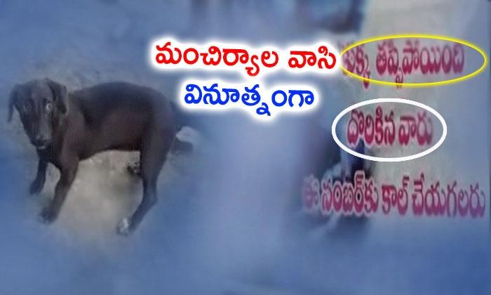 Dog Missing Flexi In Manchiryala
