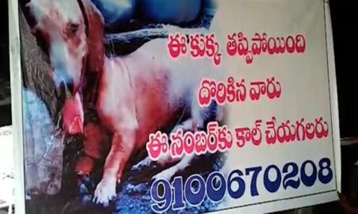 కుక్క తప్పిపోయిందని, మంచిర్యాల వాసి వినూత్నంగా-General-Telugu-Telugu Tollywood Photo Image