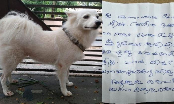 Kerala Man Abandoned His Dog Because 'She Had An Illicit Relationship With A Nearby Dog-